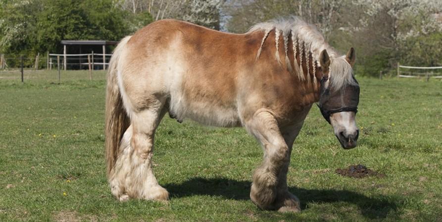 Ackergäule zu Rennpferden